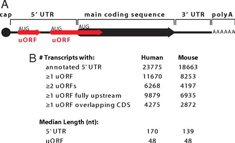 Upstream open reading frames cause widespread reduction of