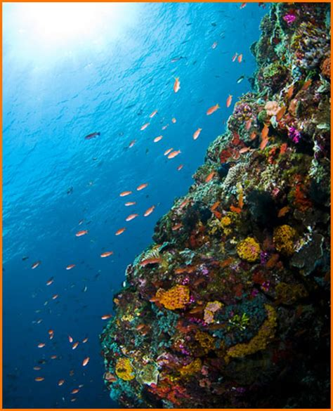 Welcome To Alor – Visit Indonesia – The Most Beautiful
