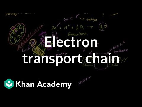 Q cycle (Electron transport chain) - YouTube