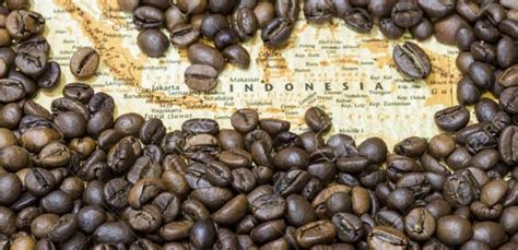 15 Types of Indonesian Coffee Beans - FactsofIndonesia