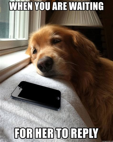 When you are waiting for her to reply - Dog waiting by
